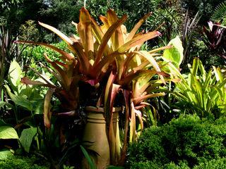 Large orange bromeliad 5 October 2008
