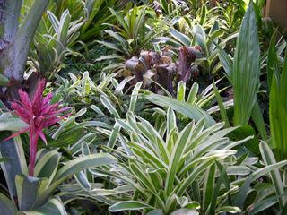 More bromeliads 5 October 2008