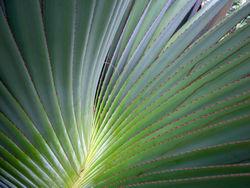 Spiral Palm 14 November 2008