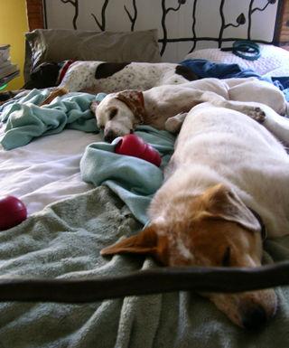 Three Dog Bed 10 December 2008