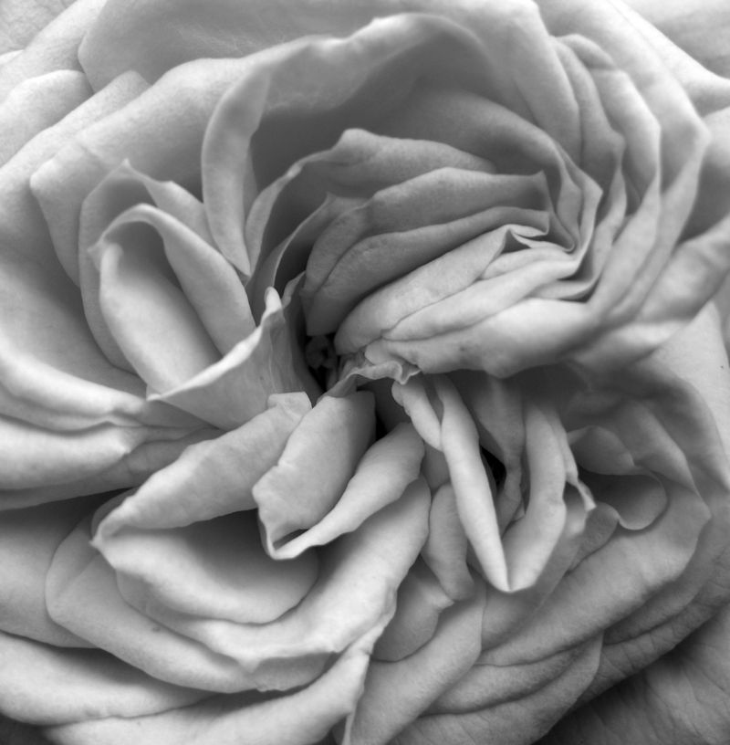 Blossomtime in Grayscale