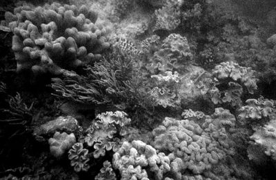 GBR I in Grayscale 22 August 2008