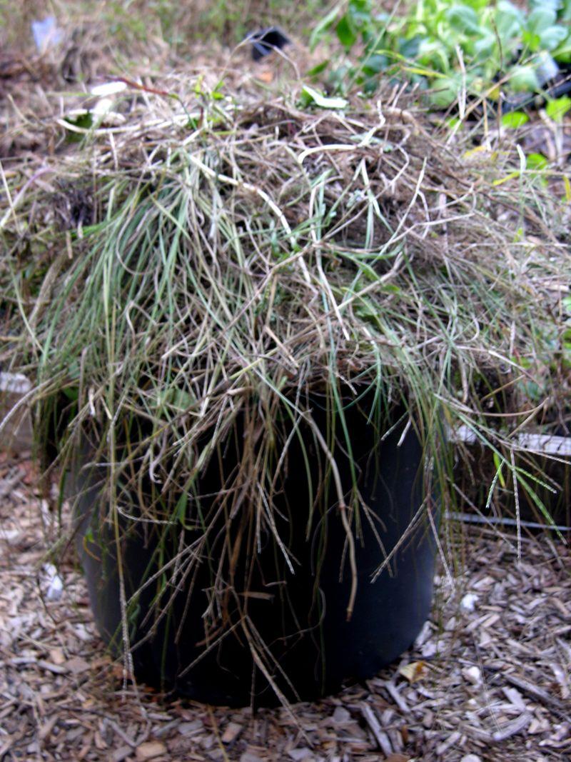 Weeds 21 September 2009