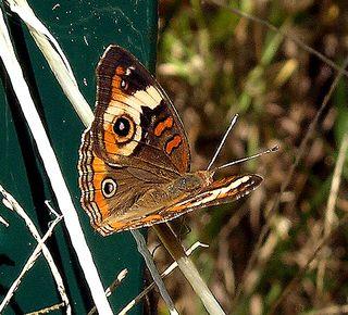 Buckeye I 5 September 2009