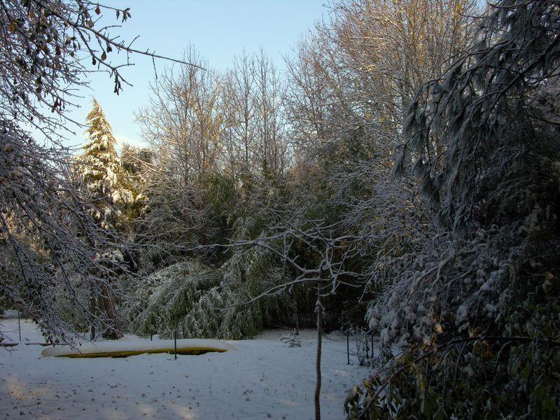 The Backyard 13 February 2010