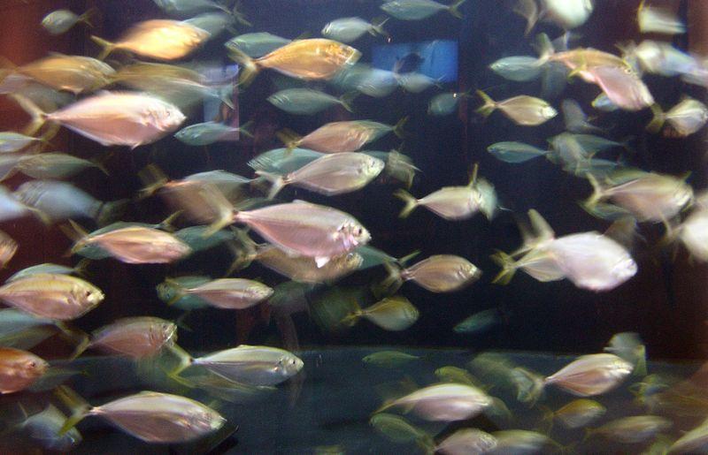 Fish II 27 February 2010
