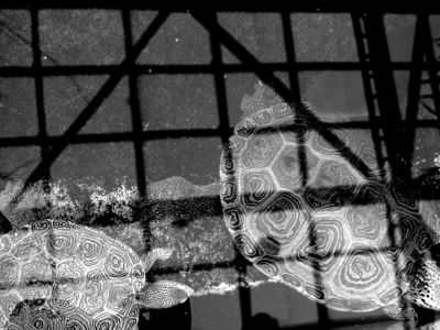 Turtles in grayscale II 27 February 2010