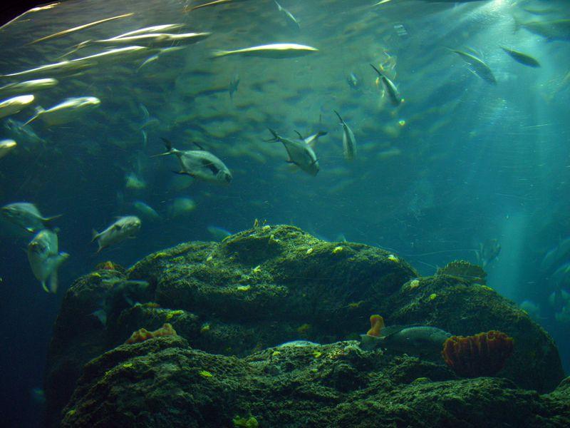 Big Ocean Tank II 27 February 2010