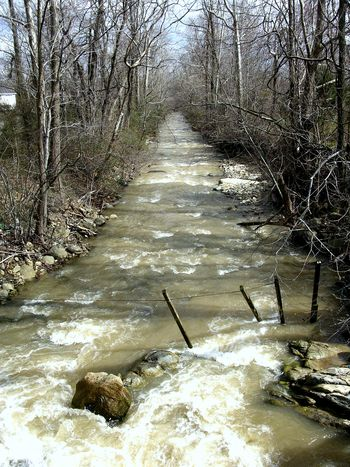 Creek below the Home Place 22 March 2010