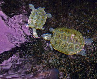 Turtles 27 February 2010