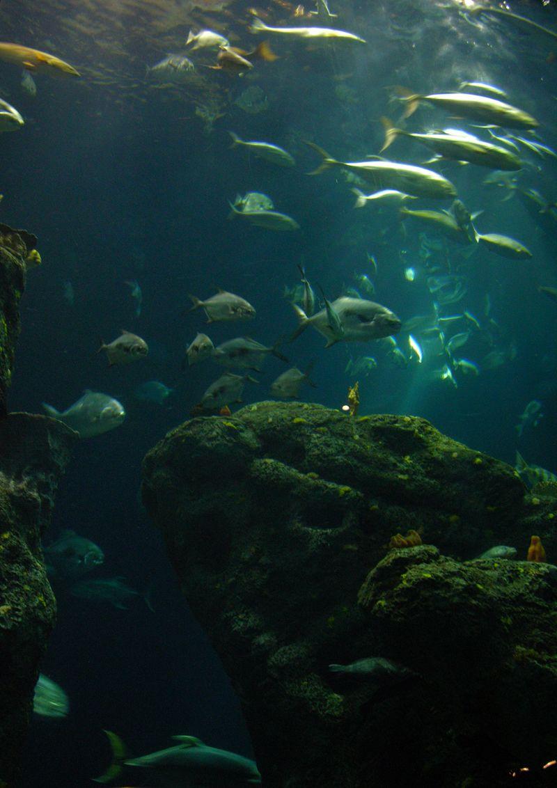 Big Ocean Tank 27 February 2010