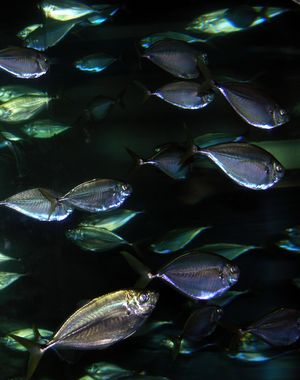 Fish I 27 February 2010