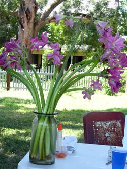 A Vase of Crinums 18 July 2009