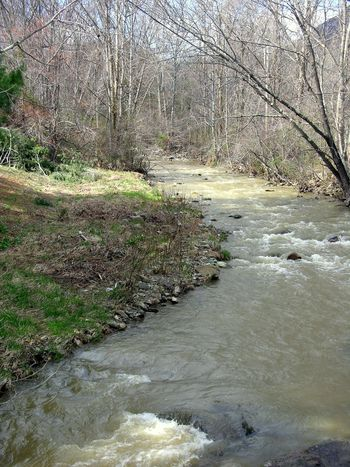 Creek below the Home Place I 22 March 2010