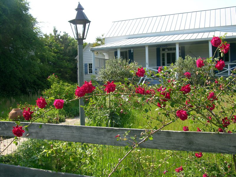 Roses on Sullivan's Island 23 April 2010