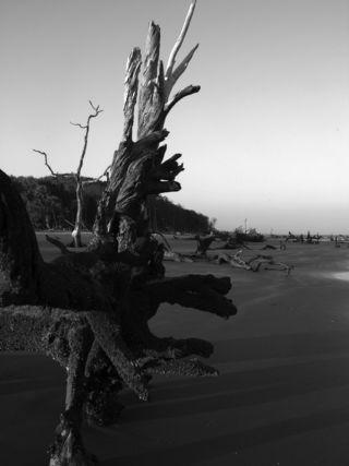 Caper's Island V 6 May 2010