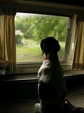 Pondering Pointer Sister Dan 13 July 2010