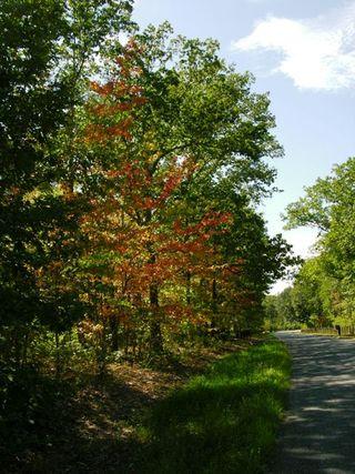 Fray's Mountain Road 11 September 2010