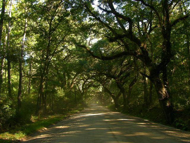 Botany Bay Road Edisto Island 9 October 2010
