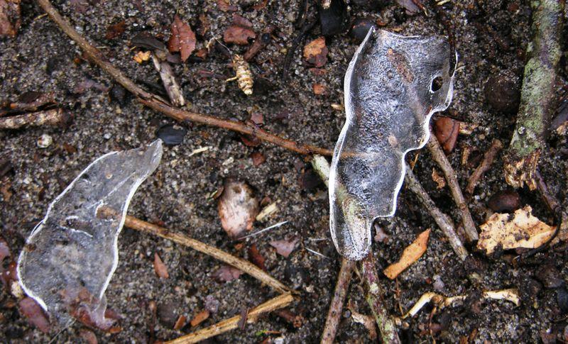 Live oak ice 10 January 2011