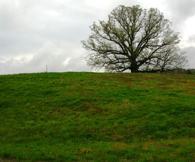 Earlysville White Oak 12 April 2011