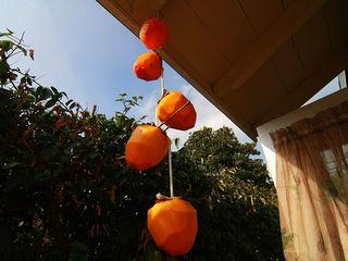 798px-Hanging_Hachiya_Persimmons_to_become_Hoshigaki