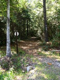 Palmetto Trail 21 October 2011