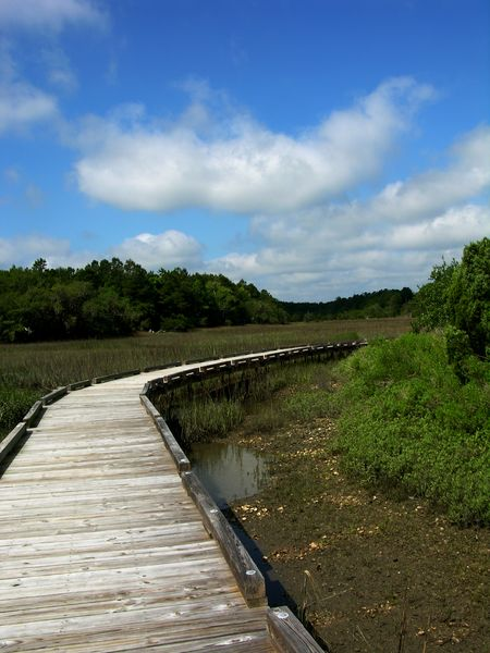 Shell Mound Boardwalk 17 May 2011