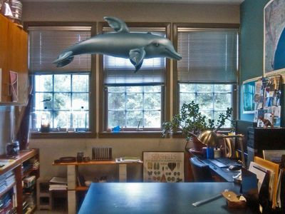 Dolphin Hung in Office 22 August 2011