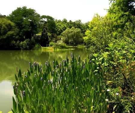Lake View II 19 May 2011