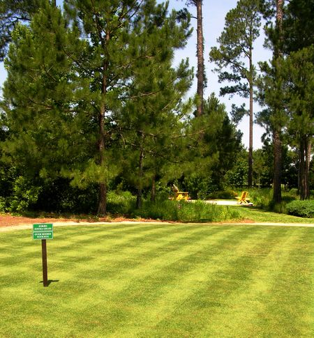 Turf grass 19 May 2011