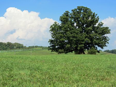 Earlysville White Oak I 11 September 2011