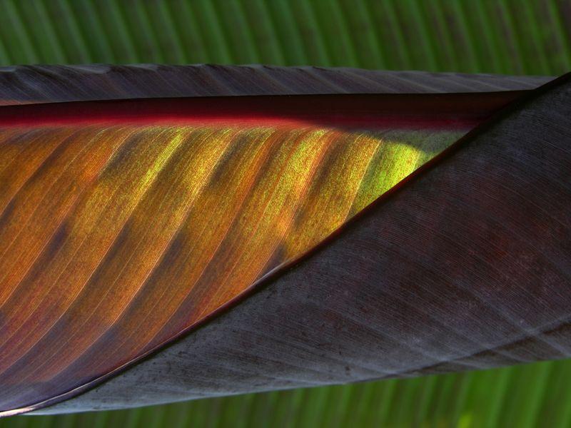 Bamboo at Moore Farms