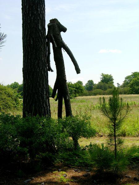 Tree man 19 May 2011