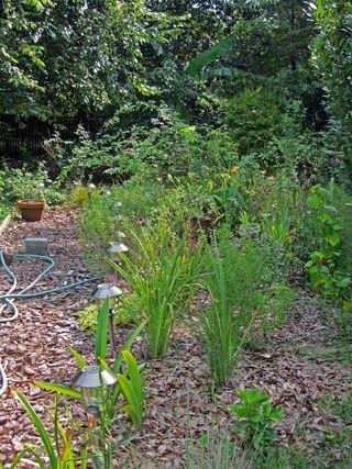 Side Garden 2 August 2011