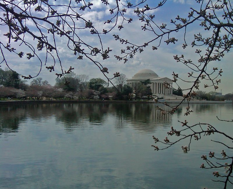 The Tidal Basin IV 15 March 2012