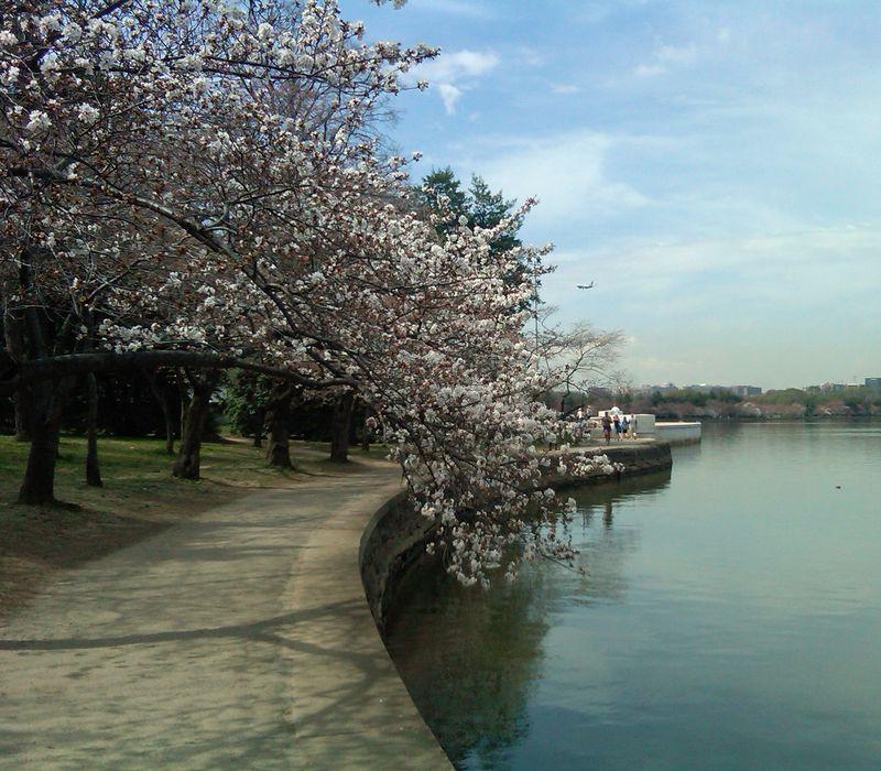 The Tidal Basin VI 15 March 2012