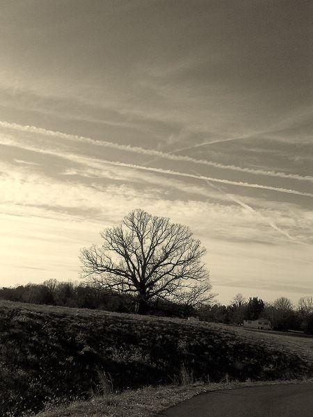 Earlysville Tree I 24 December 2011