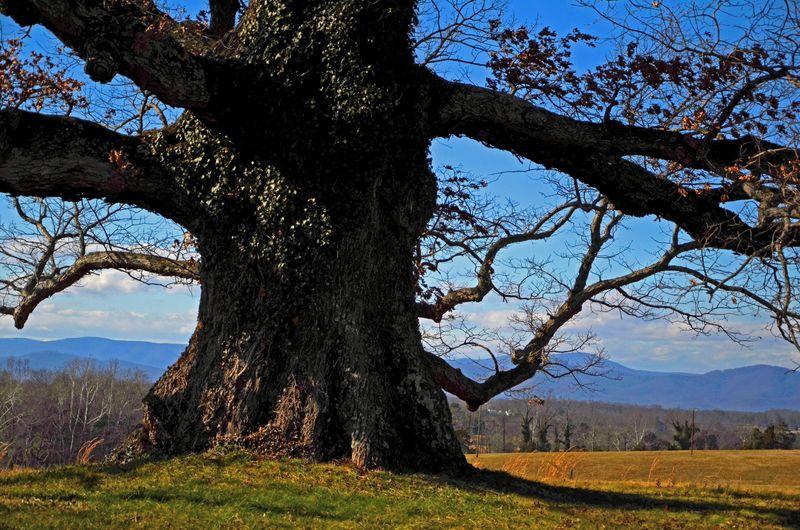 Earlysville White Oak I 28 January 2012