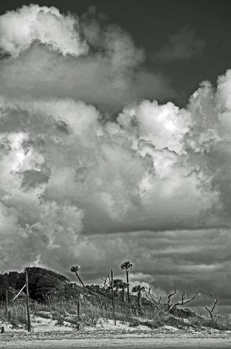 Bulls Island 15 July 2012