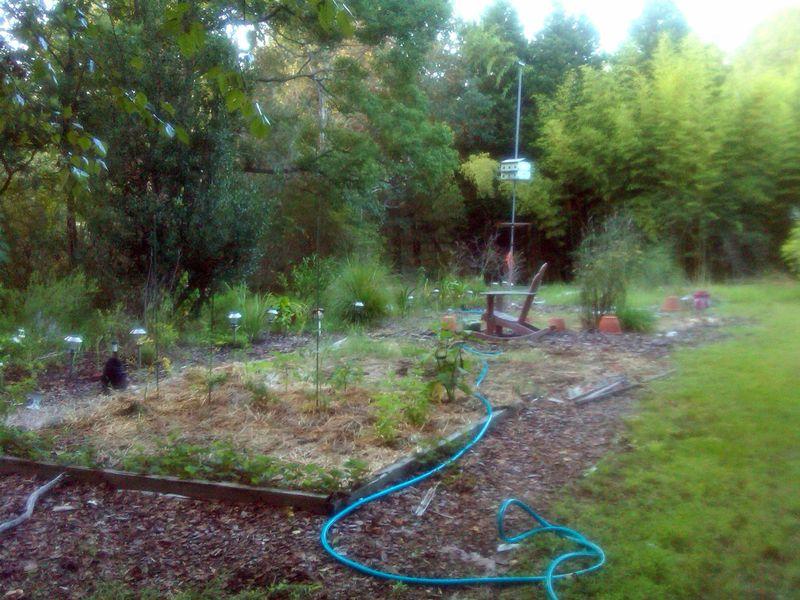 Side Garden 6 August 2012