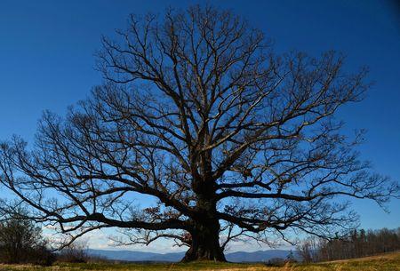 Earlysville White Oak 28 January 2012