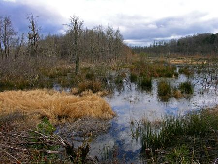 Donnelly Swamp 12 March 2012