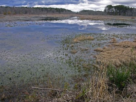 Swamp at Donnelly WMA