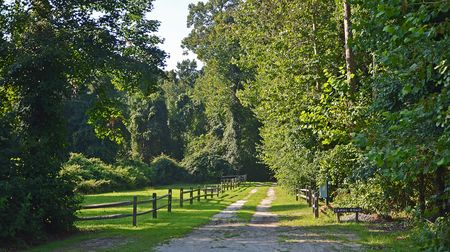 Dismal Swamp Canal Road 14 August 2012