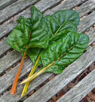 Swiss Chard Harvest 9 December 2012