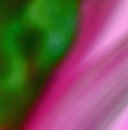 Chard Abstract I 26 February 2013