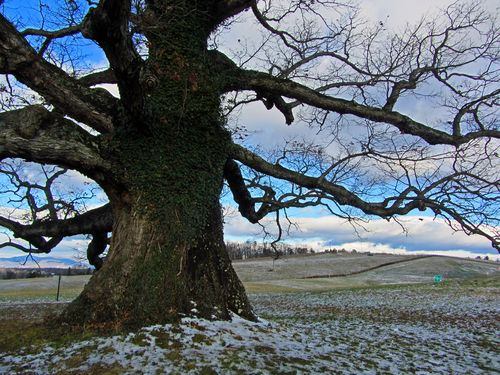 Earlysville White Oak I 26 December 2012