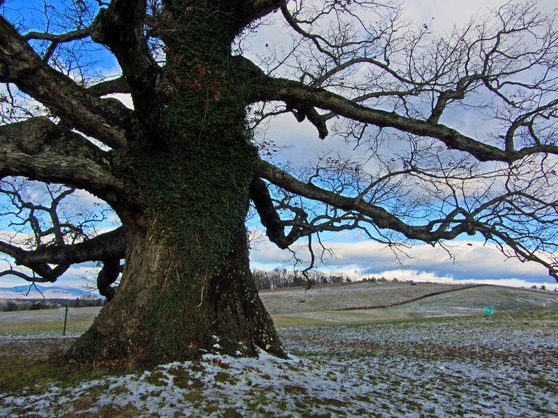 Earlysville White Oak I 26 December 2012