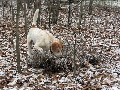 Stanley 26 December 2012